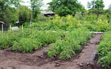 jardins-partages entre voisins